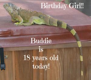 Happy 18th Birthday To My Iguana Buddie