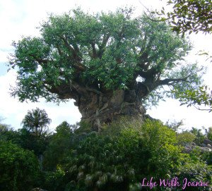 Animal Kingdom #WordlessWednesday