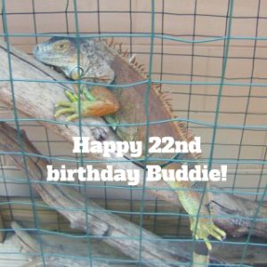 Our Iguana is 22 Years Old Today!
