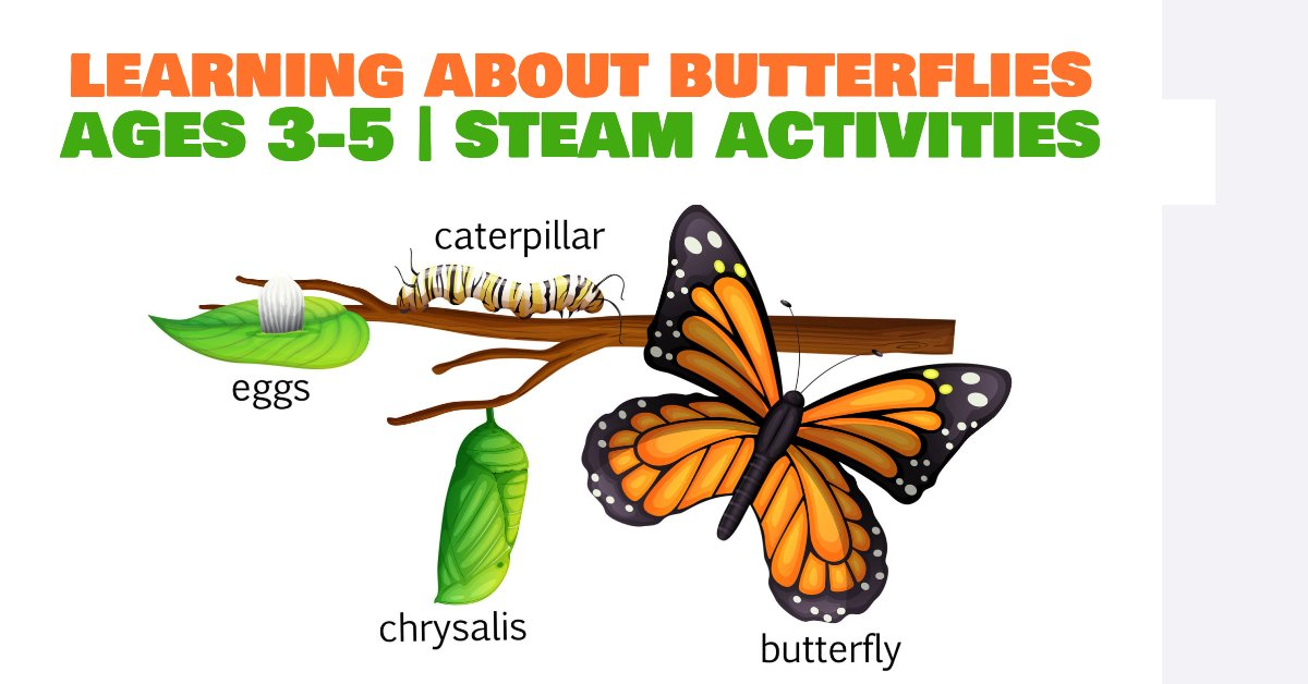Butterfly lesson plan